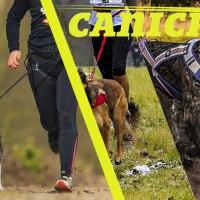 CaniCross - Corrida com Cães