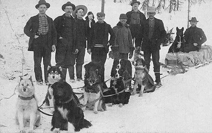 yukon-sled-dogs